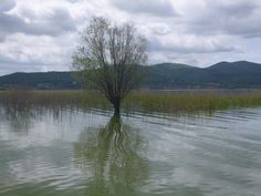 L'Oasi Naturalistica La Valle, Lago Trasimeno, Umbria, Italia