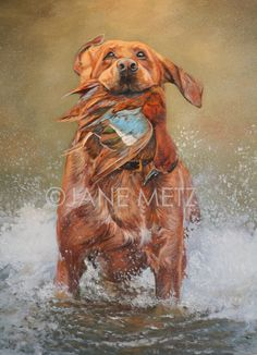 Governor. Fine Sporting Dog Art by Jane Metz.  by JaneMetzFineArt, $225.00