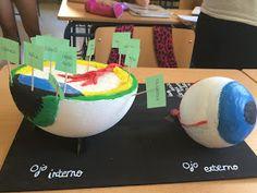 Los alumnos de 3º de ESO en la clase de Biología y Geología han realizado durante el final de curso unas estupendas maquetas de los órganos...