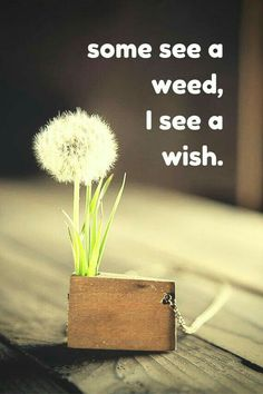 Some see a weed, i see a wish.