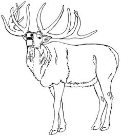 elk coloring pages to print - Bing Images Skull Coloring Pages, Horse Coloring Pages, Coloring Pages To Print, Colouring Pages, Coloring Pages For Kids, Coloring Books, Adult Coloring, Book Drawing, Leather Carving