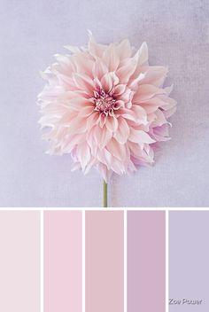 Pink Palette, Nature Color Palette, Pastel Colour Palette, Colour Pallette, Pastel Colors, Pastel Shades, Peach Pallete, Vintage Colour Palette, Bedroom Colour Palette