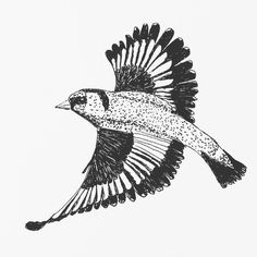 A goldfinch in flight for my daily drawing 119   #dailydrawing #drawing #ink #inkdrawing #bird #birdstagram #ilovebirds http://ift.tt/2kuIsvA A goldfinch in flight for my daily drawing 119  dailydrawing drawing ink inkdrawing tumblr bi