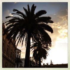 Palm tree, sunset, Seville, Spain
