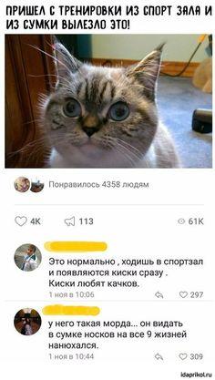 Cat Memes, Funny Memes, Russian Jokes, Creepypasta Characters, Bad Cats, Stupid Memes, Funny Animals, Haha, Laughter