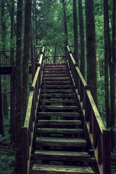 Ladder in the Forest Women Camping, Camping Life, Camping Photography, Love Photography, Outdoor Life, Outdoor Fun, Garden Stairs, Stair Steps, One With Nature