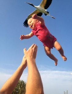of the stork bringing baby has been verified. Perfectly Timed Photos - 50 Shots - Page 42 of 50 - Cyber BreezeTheory of the stork bringing baby has been verified. Perfectly Timed Photos - 50 Shots - Page 42 of 50 - Cyber Breeze Funny Baby Pictures, Funny Photos, Cool Pictures, Cool Photos, Time Pictures, Funny Images, Perfect Timed Pictures, Bizarre Photos, Sports Pictures