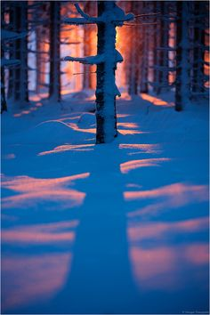 winter fading light in the forest