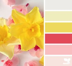 pink and yellow kitchen - Google Search