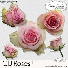 Digital Art :: Element Packs :: Roses 04