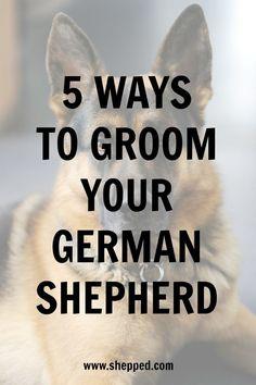 5 ways to groom your #GermanShepherd