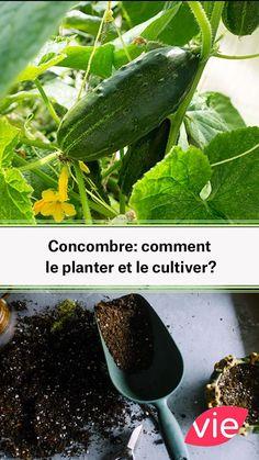 Potager Garden, Herb Garden, Vegetable Garden, Home And Garden, Comment Planter, Permaculture, Agriculture, Celery, Cucumber