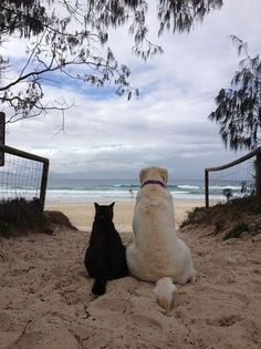 Besties at The Beach