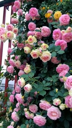 Good Morning Flowers, Nature Gif, Beautiful Flowers Garden, Flower Wallpaper, Brighten Your Day, Beautiful Landscapes, Pink Roses, Garden Landscaping, Beautiful Places