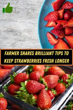 #Farmer #Shares #Brilliant #Tips #Keep #Strawberries #Fresh #Longer Ombre Hair, Balayage Hair, Baby Food Recipes, Healthy Recipes, Healthy Food, Angelina Jolie Style, Minimalist Nails, Le Jolie, Winter Fashion Outfits