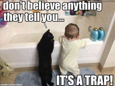 don't believe anything they tell you... IT'S A TRAP! #catoftheday