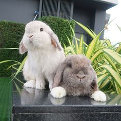 Bunny Rabbit T Shirt Apparel Baby Animals Pictures, Cute Animal Pictures, Cute Little Animals, Cute Funny Animals, Fluffy Animals, Animals And Pets, Cute Baby Bunnies, Cute Creatures, Animals Beautiful