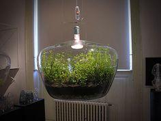 Pendant Glass Light Terrarium From Prague
