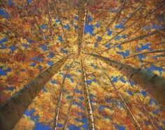 """Ascension.""   Original contemporary landscape painting on canvas. Looking up through Aspen trees during the autumn in New Mexico near Santa Fe. Painting by artist Johnathan Harris. Own a limited edition, fine art giclee print."