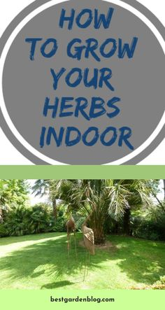 Visit the webpage to learn more on Take A Look: Indoor Herb Garden Ideas Check the webpage to learn Herbs Indoors, Herb Garden, Garden Design, Garden Ideas, Gardening, Check, Indoor Herb Gardening, Lawn And Garden, Herbs Garden