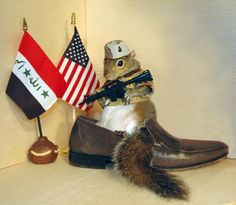 Sugar Bush Squirrel - International Superstar - Supermodel & Military Hero