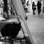 [T.S.C.Today 3/6]  #cat #photocat #neko #NEX #Biogon28 パルセン黒猫2。あっ、撮影は2/10でした。: http://twitpic.com/8stlz2