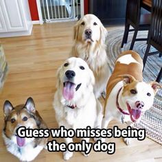 Guess who misses being the only dog?