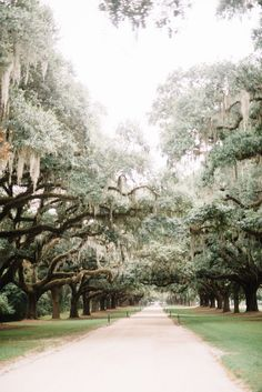 Charleston Travel Guide with Kids in Tow   LynzyAndCo.com
