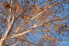 Un rato #Valencia #MeryAlin#Photography #Spain #creativity#creative #proyecto #Agradecimiento #2015 #fotografia #España #blog #proyect #proyecto #grateful #felizdia #agradecida #naturaleza #jardin #arbol