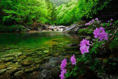 korea,jirisan,mountain Dream Vacation Spots, Dream Vacations, Seoul Korea, Nature Tree, What A Wonderful World, Travel And Leisure, Adventure Is Out There, Landscape Photos, Asia Travel