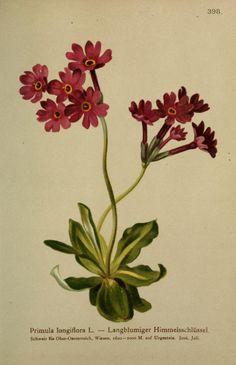 4 - Atlas der Alpenflora / - Biodiversity Heritage Library