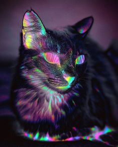 """CHATOYANT [adjective] changing in lustre or colour. like a cat's eye. Jewellery: reflecting a single streak of light when cut in a cabochon. Etymology: from French chatoyer, """"to gleam like a. Like A Cat, I Love Cats, Cool Cats, Gaming Logo, Trippy Cat, Digital Foto, Psy Art, Cat Aesthetic, Psychedelic Art"""