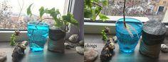 https://collectingthingsblog.wordpress.com/2016/01/10/inmultirea-iederei-de-apartament/