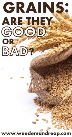 Grains: Are they good or bad?