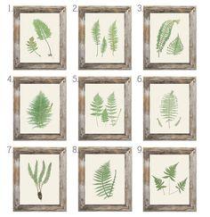 Set of 4 Fern Botanical Prints 8x10 by KSarahDesigns on Etsy