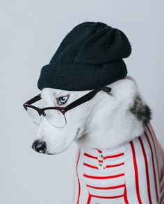 Instagram Love: Petee the Husky