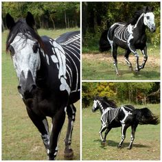 It's a Halloween Horse!!