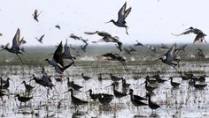 Best time to Visit Chilika lake in Odisha as 700000 migratory birds arrive