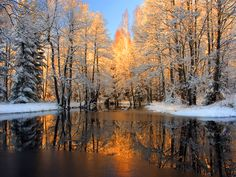 First Tag wallpapers Page First Nature Fall Snow Walking Trees