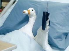 aflac duck singing in the shower aflac duck pinterest animal