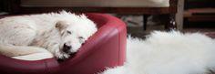 Hochwertige handgefertigte Hundebetten