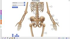 Students learn about the anatomy of the human body in this interactive whitboard activity.  You can select a male or female human body, skeleton, muscles, nervous sustem, cardiovascular system or organs.  Try it out yourself: http://r.gynzy.com/59412de3