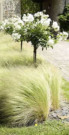 graminées cheveux d'ange potted plants among tall grasses Ornamental Grass Landscape, Ornamental Grasses, Landscape Grasses, Tall Grasses, Landscape Architecture, Landscape Design, Garden Art, Garden Design, Home Landscaping