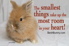 There will always be a special place in our hearts for bunnies! http://best4bunny.com/