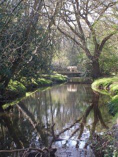 Beaulieu river ipley bridge, Hampshire, UK