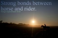 Things Equestrians Love