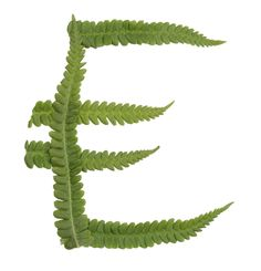 Type made of leaves. #typography