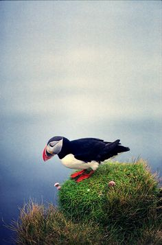 Puffin these things are adorable