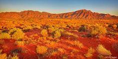 Image result for australian landscape