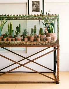 A Victorian aquarium from Blackman Cruz serves as a display case for cacti in a Venice Beach, California, home.